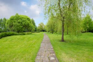 stone path surrounded with green grass and trees