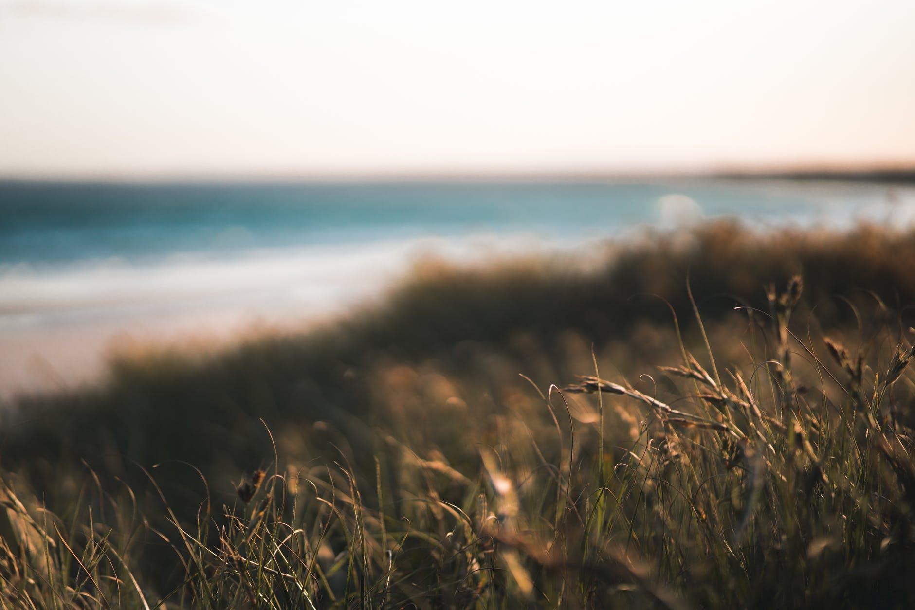 dry grass growing near seashore on warm sunny day