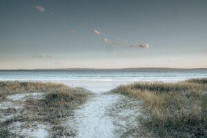 scenic landscape of grassy seashore in winter