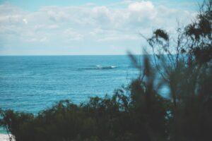 wavy tranquil sea near coast with green bushes